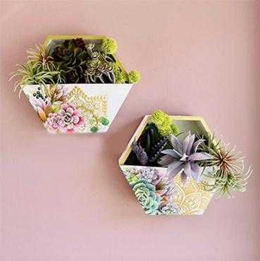 Succulent Plant Hanger